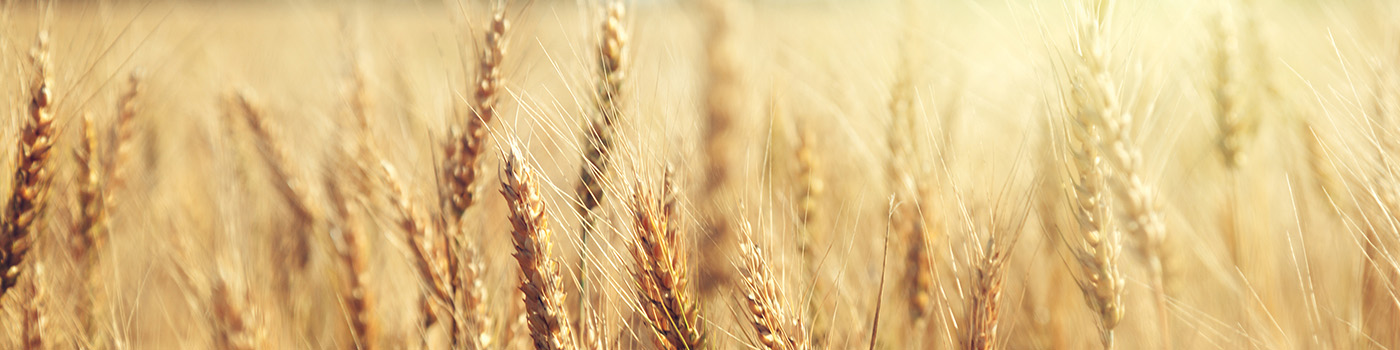 Wheat-Header-Image-1400x350